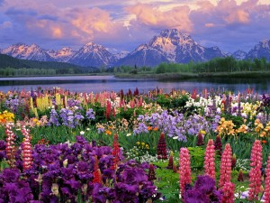 Spring garden